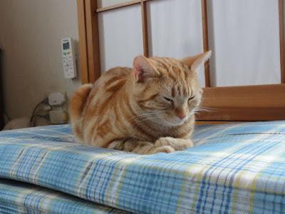猫が目をつぶって座っています。