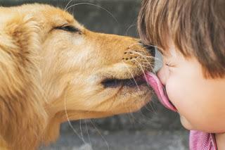 dog licks