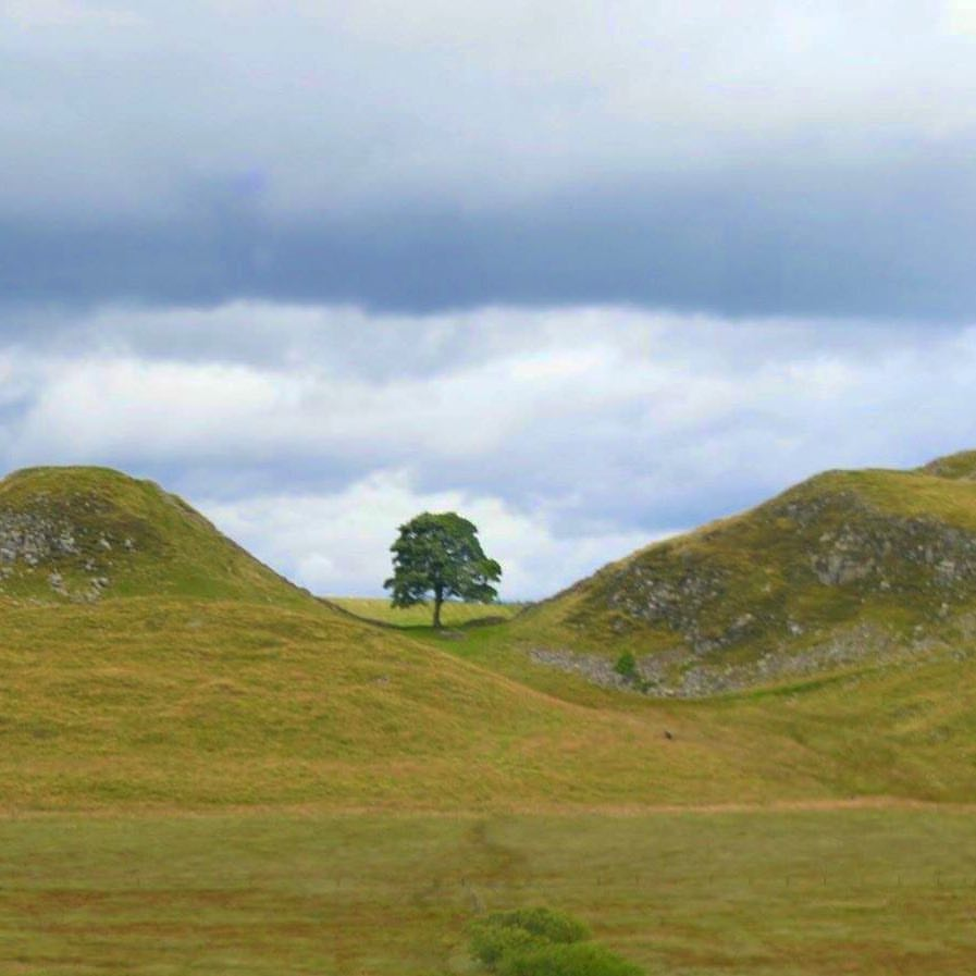 25 days out, events and things to do with kids in Northumberland National Park - Sycamore Gap