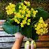 [Desafio]: Flor Amarela 🌻