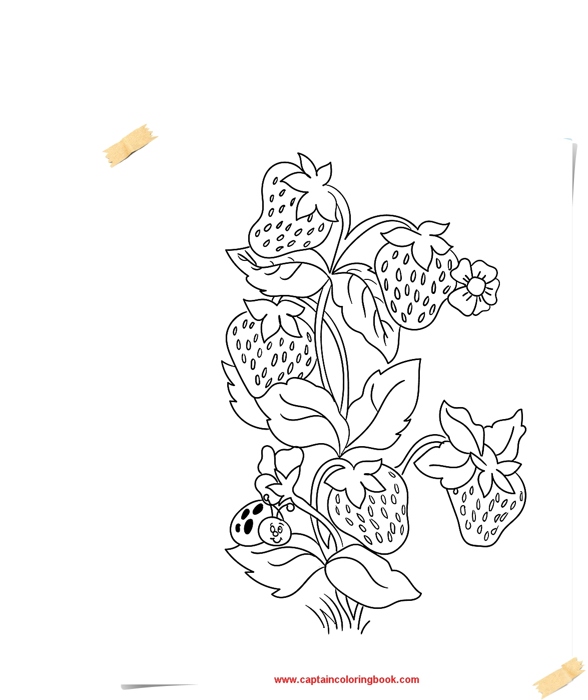 fruits and vegetables strawberry coloring pages coloring page