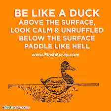 quotes about positive: Be like a duck above the surface, look calm & unruffled below the surface paddle like hell