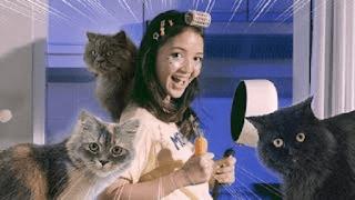 Lirik Lagu Aya Anjani - Kucingku