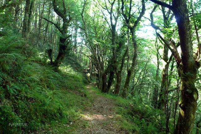 Bosque Ruta del Agua
