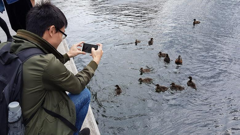 運河上的水鳥,看著有人餵食就趕緊跑過來