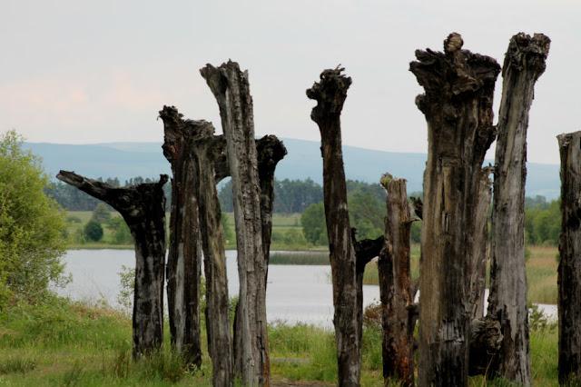 Bog Track Sculpture