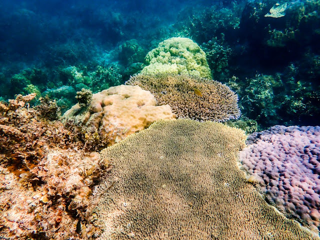 Lagoon reef-palawan-philippines
