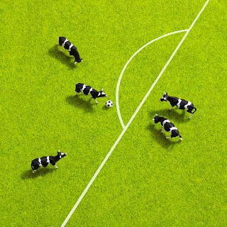 Vacas y futbol