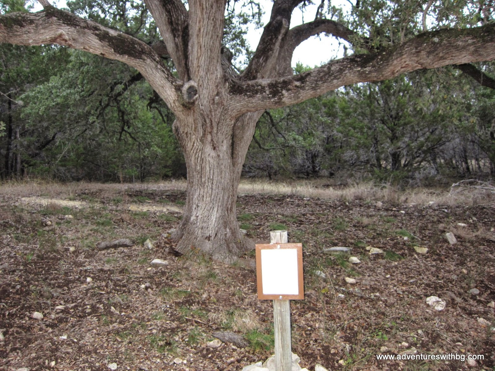 Make sure you stop by to learn a little more about oaks in the area.