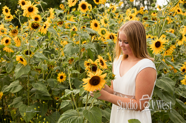 Sophies Sunflowers - Senior Photography - Central Coast Photographer - Studio 101 West Photography