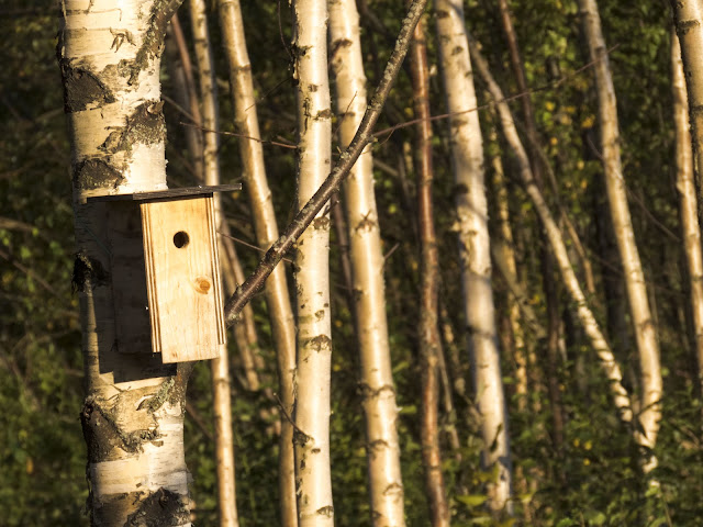 Finland road trip: Birdhouse in Hamina