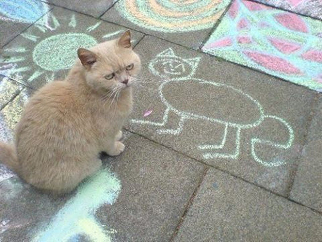 Angry cat is not amused. Cat checks out his sidewalk chalk portrait. Who's Your Daddy? marchmatron.com