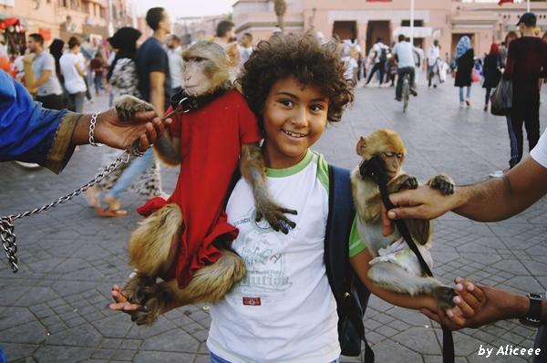 Djemaa-el Fna-maimute-Marrakech