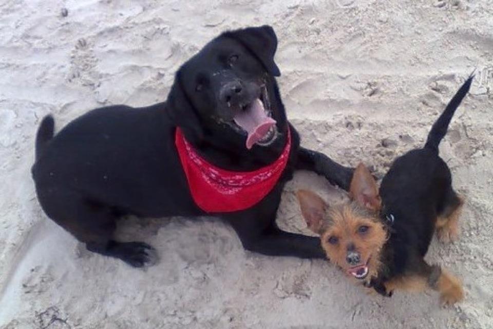 kræftknuder hos ældre hunde