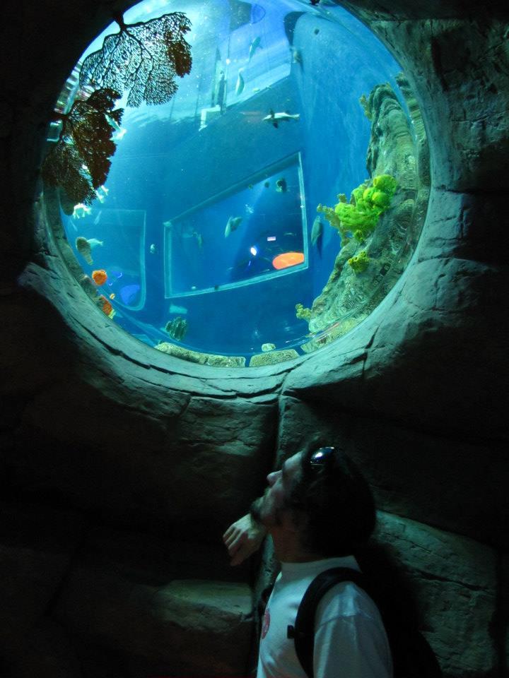 Home Fish Care   Aquarium Cleaning Service and Aquarium Hire, Brisbane