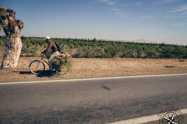llevando hierba en bici