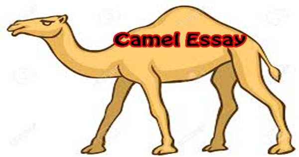 camel essay in urdu Professional essay writing help available 24/7 original papers, fast turnaround and reasonable prices call us at 1-844-628-7555.