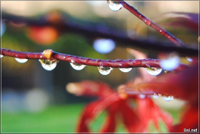 thơ tình mưa mùa hạ