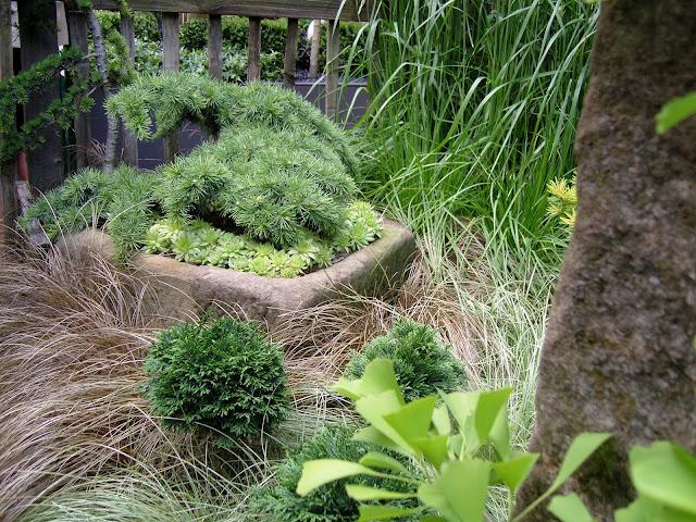 miniaturowe iglaki w ogrodzie