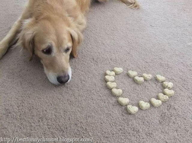 Dog and heart