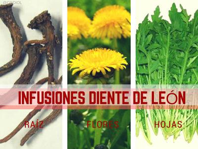 Infusión de Diente de León, Tres recetas de hojas, raíz y flores