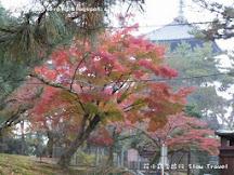 紅葉季節下的興福寺