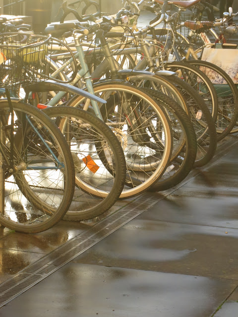 Front wheels of bicycles in a row with afternoon light and wet pavement