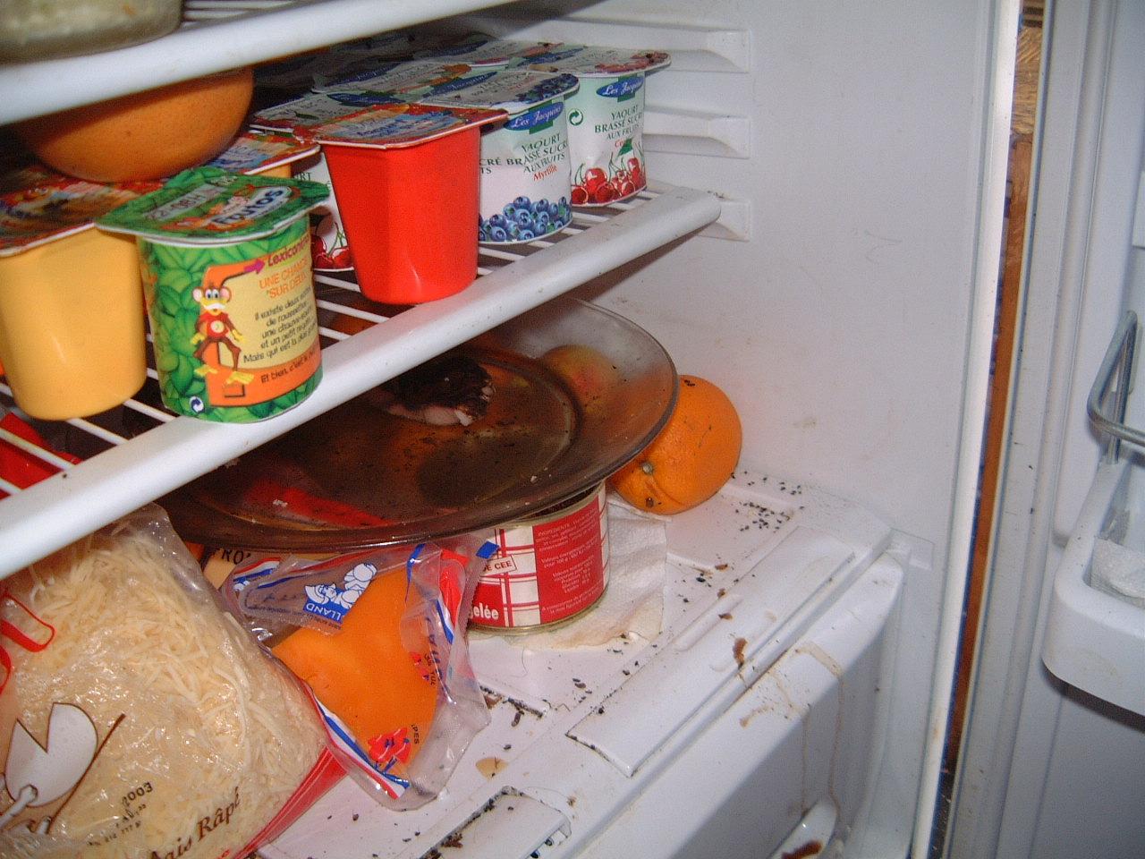 Blatte De Cuisine Photo invasion de cafards, blattes dans appartement