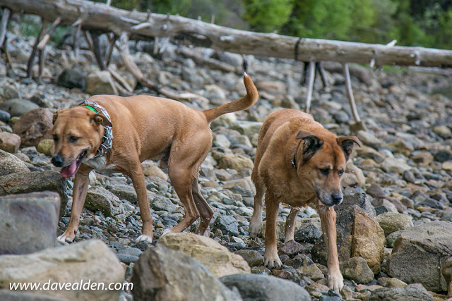 Dogs on the beach in Acadia National Park, Mount Desert Island, Maine