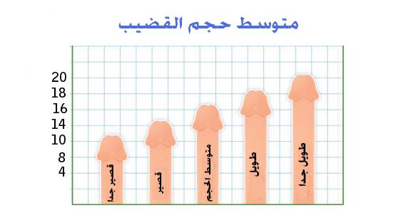 متوسط حجم القضيب