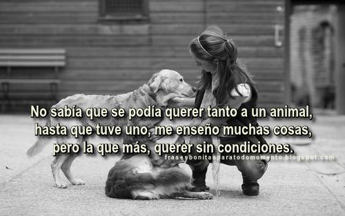 No sabía que se podía querer tanto a un animal, hasta que tuve uno, me enseño muchas cosas, pero la que más, querer sin condiciones.
