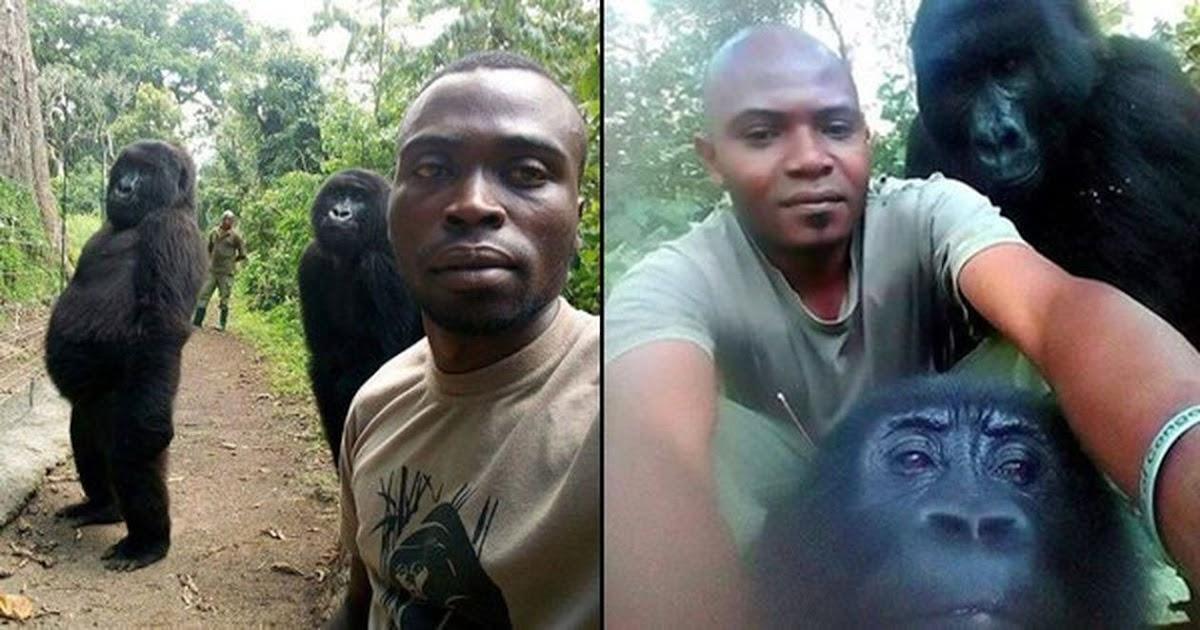 Epic Selfie Of Gorillas Posing With Anti-Poaching Rangers