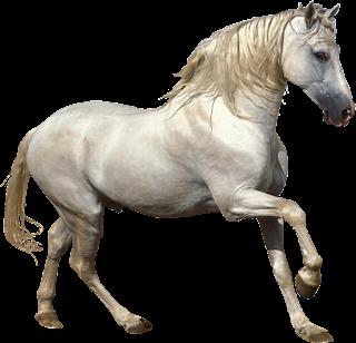 Imagens PNG fundo transparente cavalos