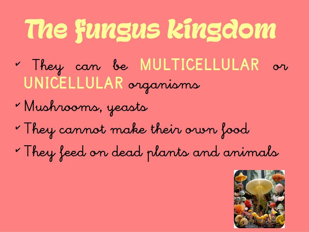 Milaenglish Blog The 5 Kingdoms