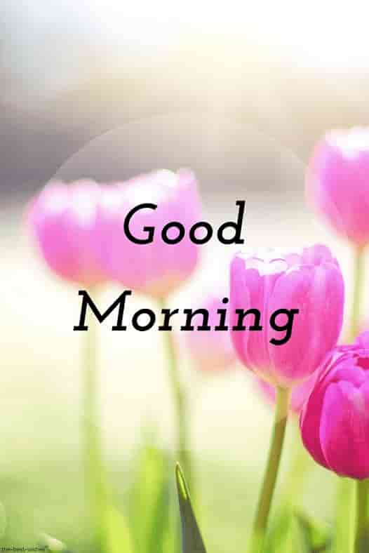 the best good morning wishes images with pink flowers