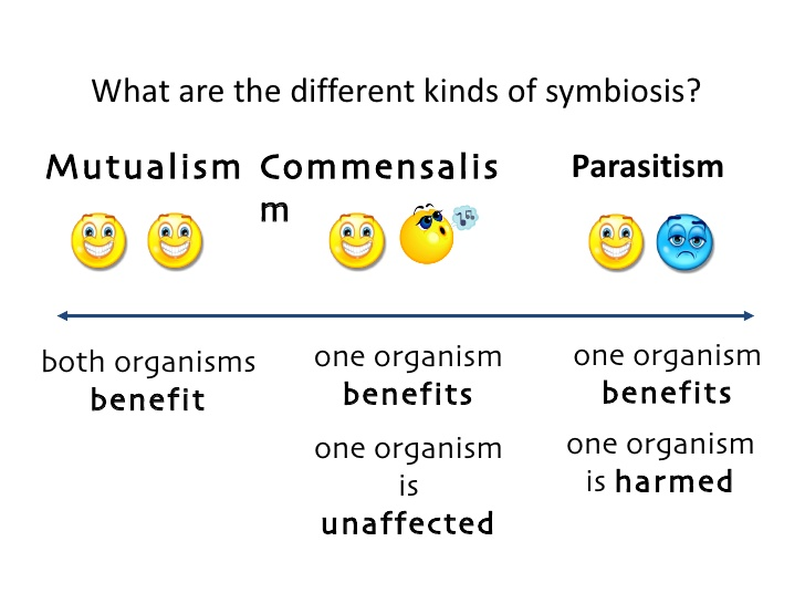 how are the three types of symbiotic relationship different