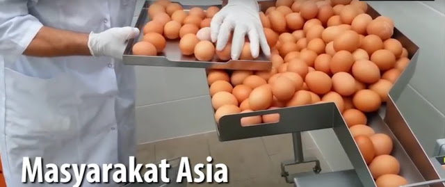 Heboh!! Telah Beredar Telur Palsu mengandung bahan kimia yg menyebabkan kematian, berikut videonya....
