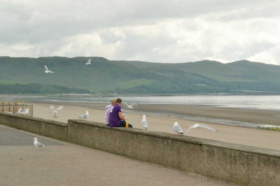 seagulls attack seaside scotland couple little big life