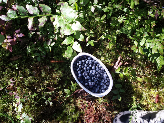 Turn blueberries into jam - recipe
