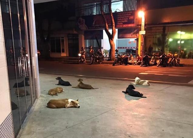 Em Cianorte/PR, morador de rua é internado, e cachorros aguardam por ele na entrada de hospital
