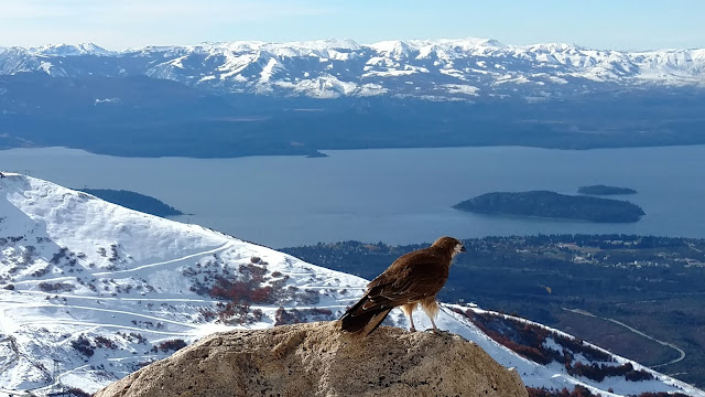birds eye view of Patagonia