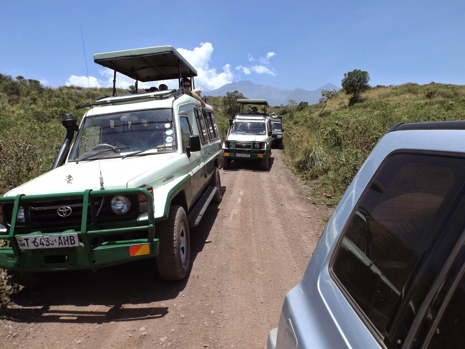 safari drank mini