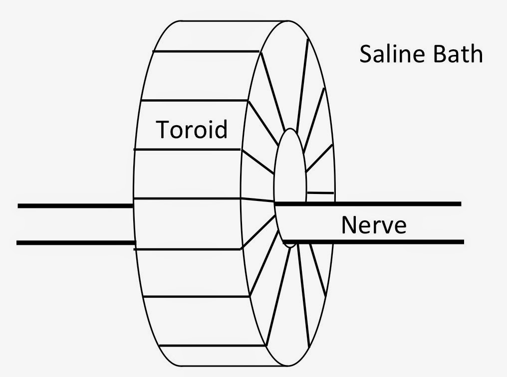 A drawing of a wire-wound ferrite-core toroid, used to measure the magnetic field of a nerve axon.