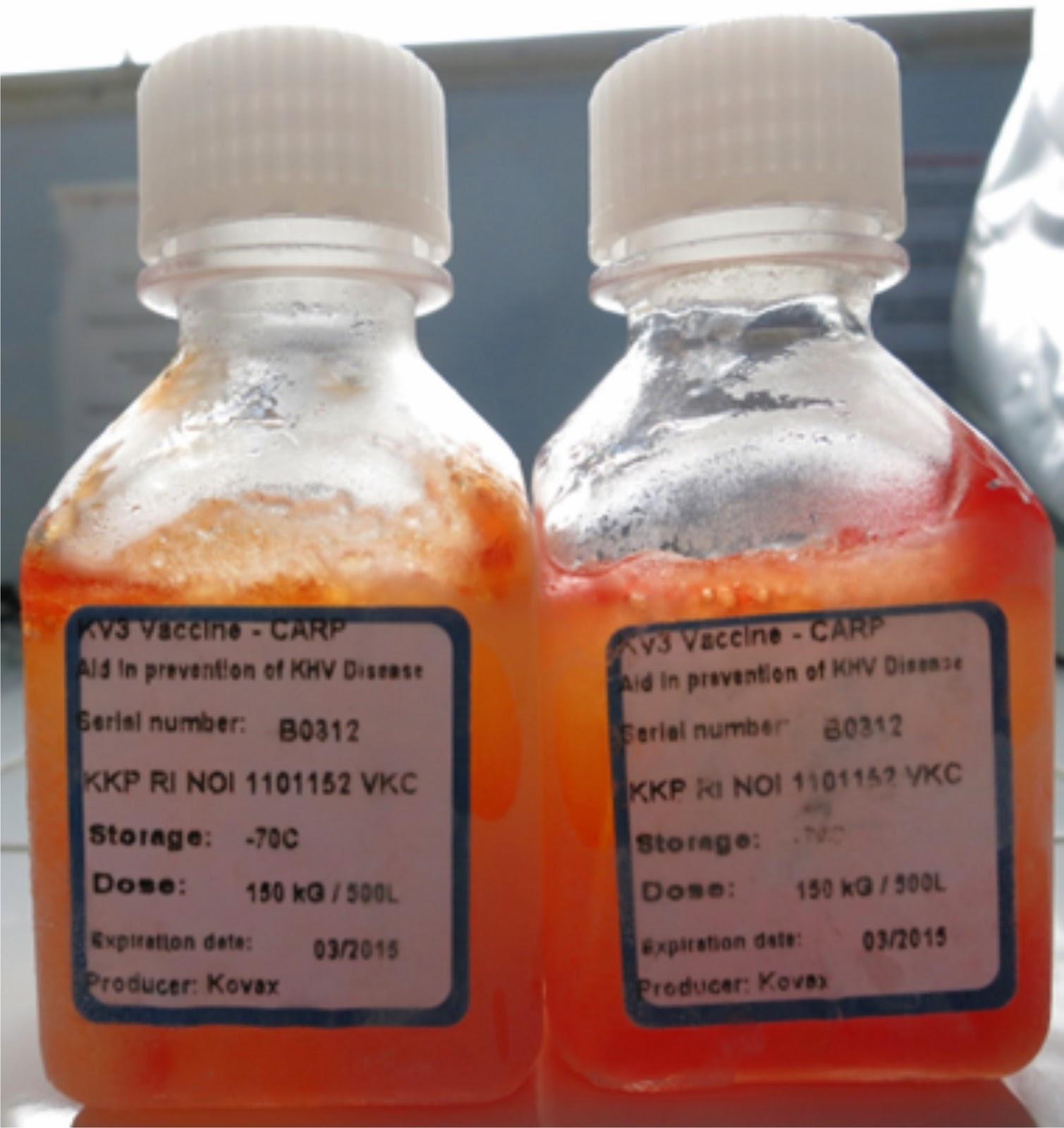 Vaksin KV3
