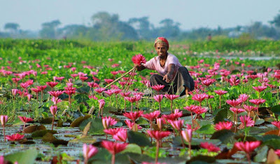 Beautiful Bangladesh Review, The Land Of  Beauty
