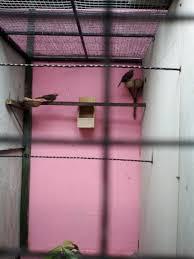 Burung Cucak Rowo - Keberhasilan Penangkaran Salah Satunya Ditentukan Oleh Sangkar Penangkaran - Penangkaran Burung Cucak Rowo