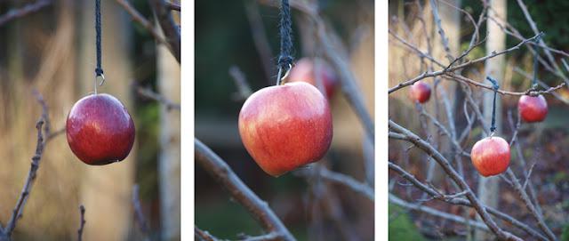 Afbrækket gren får nyt liv med røde æbler