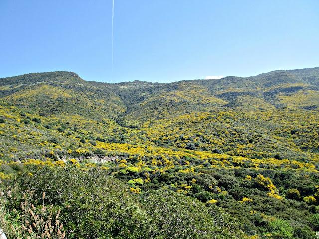 Primavera in Sardegna