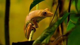7 Fakta Menarik Seputar Hutan Amazon Yang Belum Kamu Tahu