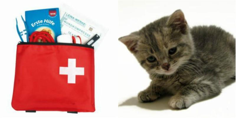 Κουτί Πρώτων Βοηθειών για γάτες
